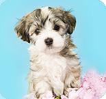 Hunde Spiele Kostenlos Online