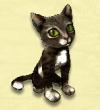 Ασπρόμαυρη γάτα φάρμας
